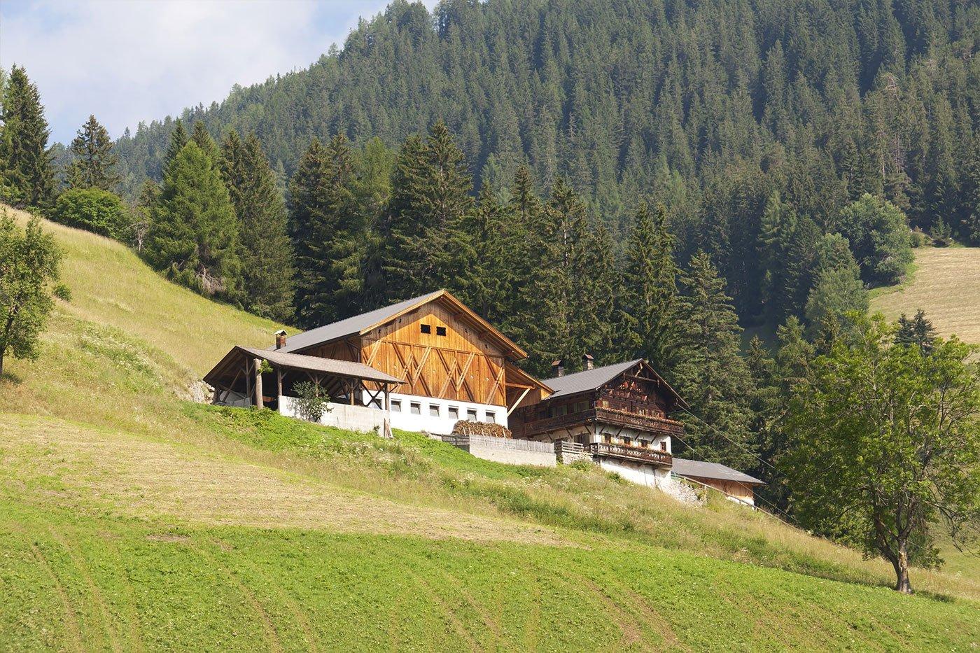 Due case di legno in una localtà di montagna con prato verde intorno e dei pini