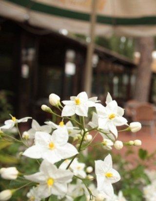 fiori fuori ristorante