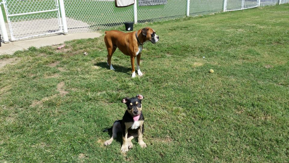 Dogs at our dog training facility in Jenks, OK