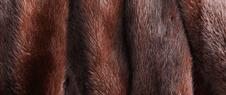 Pellicce e pelli