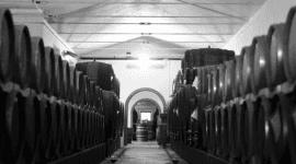 vitivinicole produzione enologica