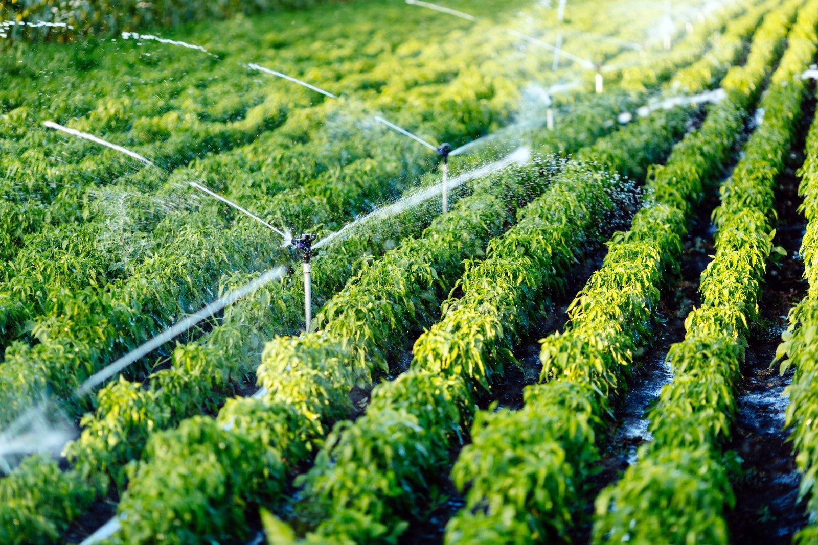 sistema di irrigazione in funzione irrigazione delle piante agricole