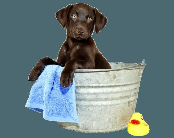 Un cane mentre viene lavato