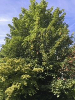 Tree Management in Hereford and Herefordshire