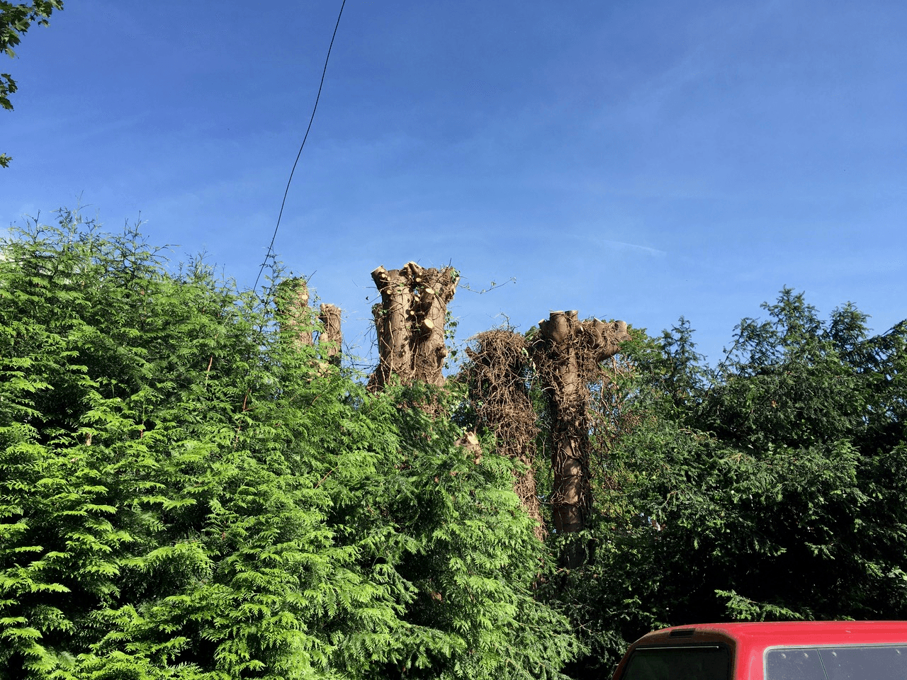Tree Work in Hereford and Herefordshire