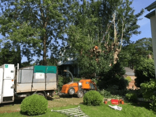 Tree Surgeon in Hereford and Herefordshire