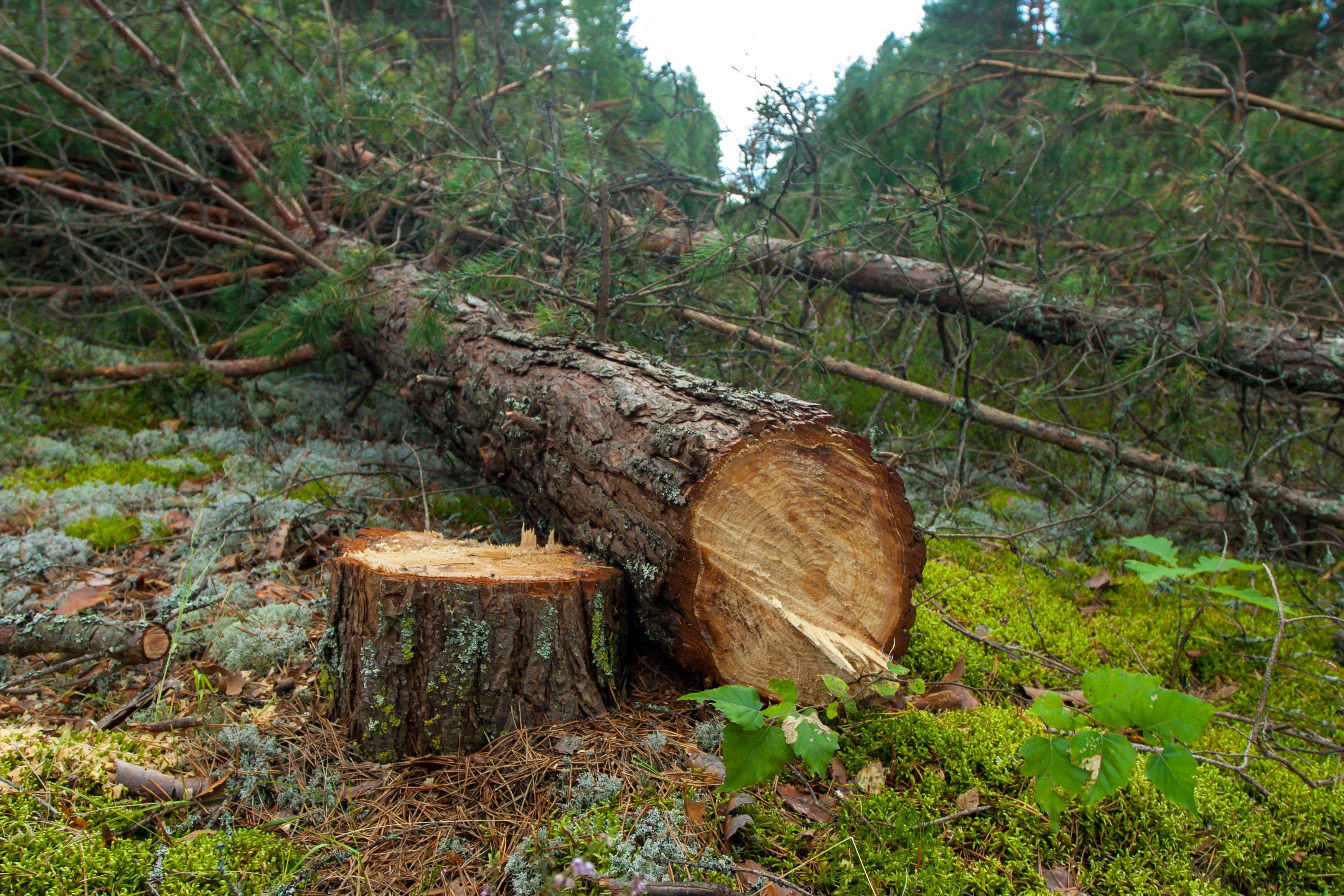 tree removal company nashville