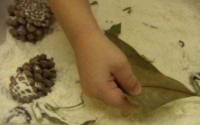 riconoscere le foglie al tatto