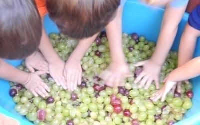 piccoli schiacciano uva
