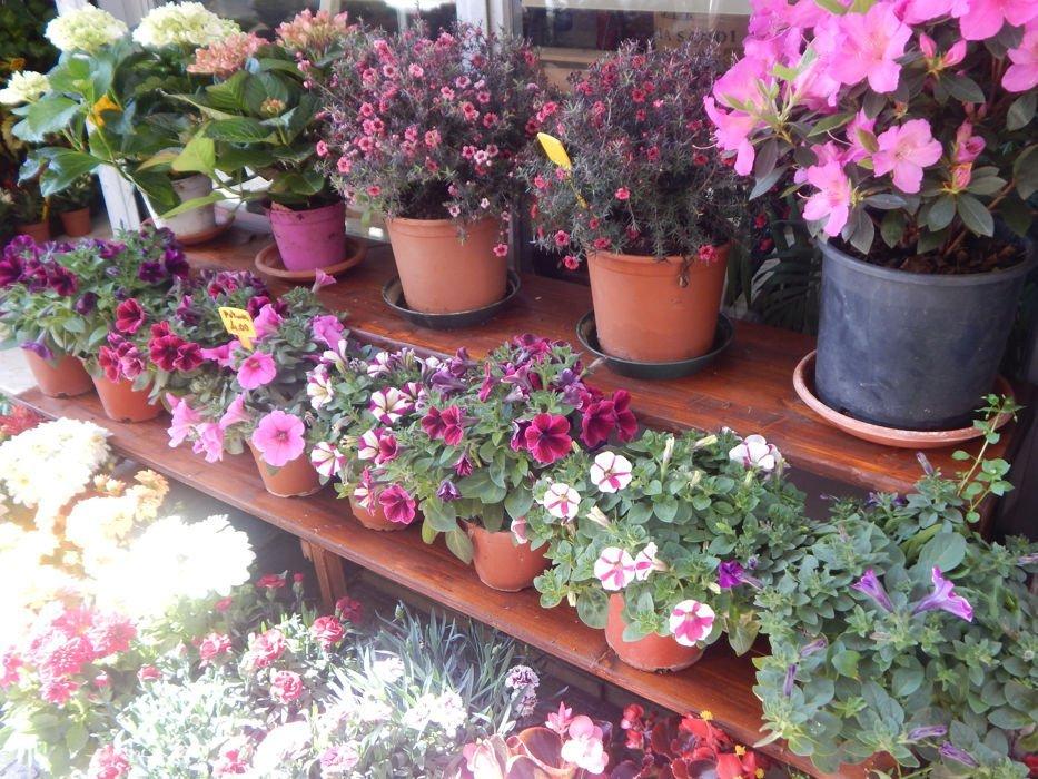 Esposizione vasi di fiori