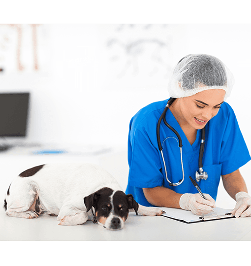 Veterinarian filling out paperwork and a dog lying on the desk