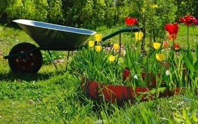 Assistenza e manutenzione giardino