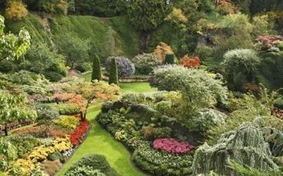 Piante per giardini
