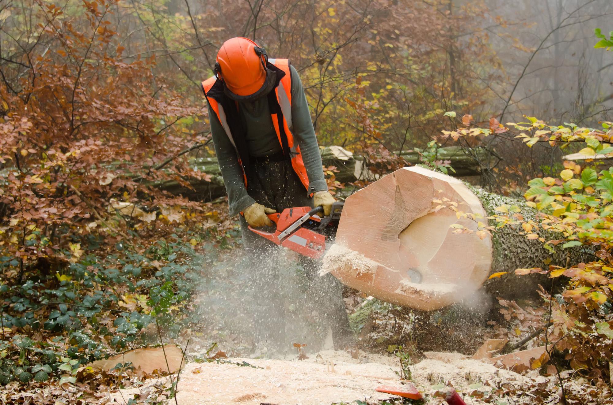 Arborist providing tree cutting service in Eatonton, GA