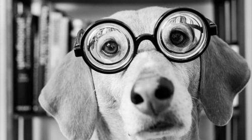cane con occhiali a fondo di bottiglia