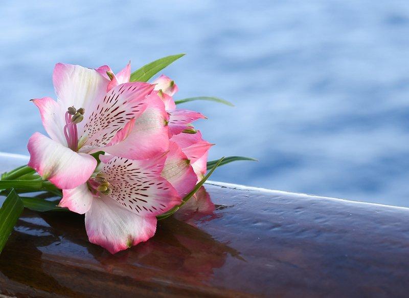 fiore rosa su una bara