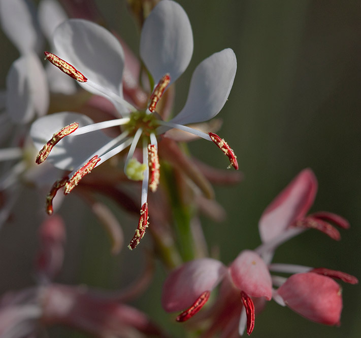 smal flower stamens