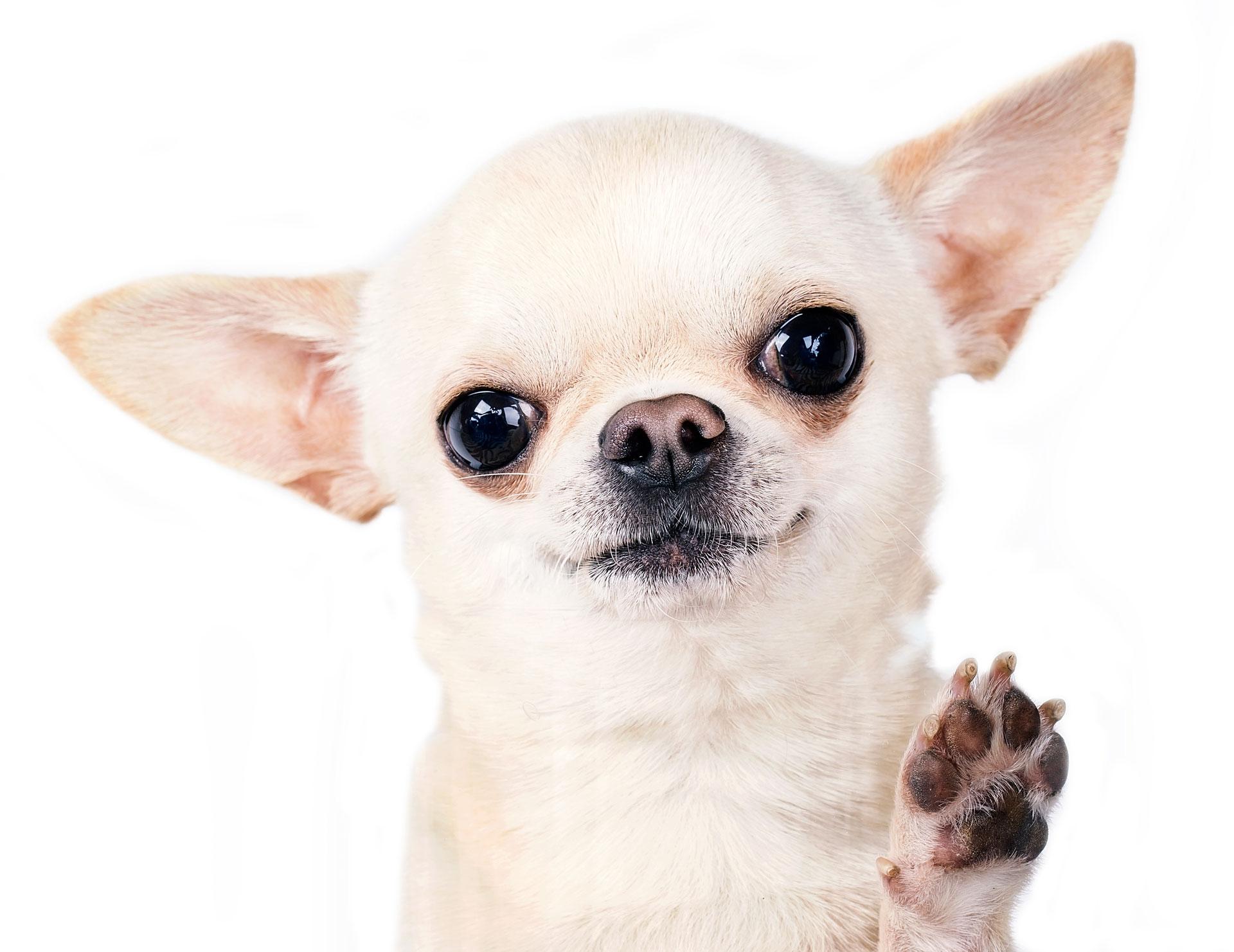 Pet Grooming San Antonio TX