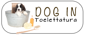 Dog-In-Toelettatura