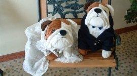 abiti per cani da cerimonia