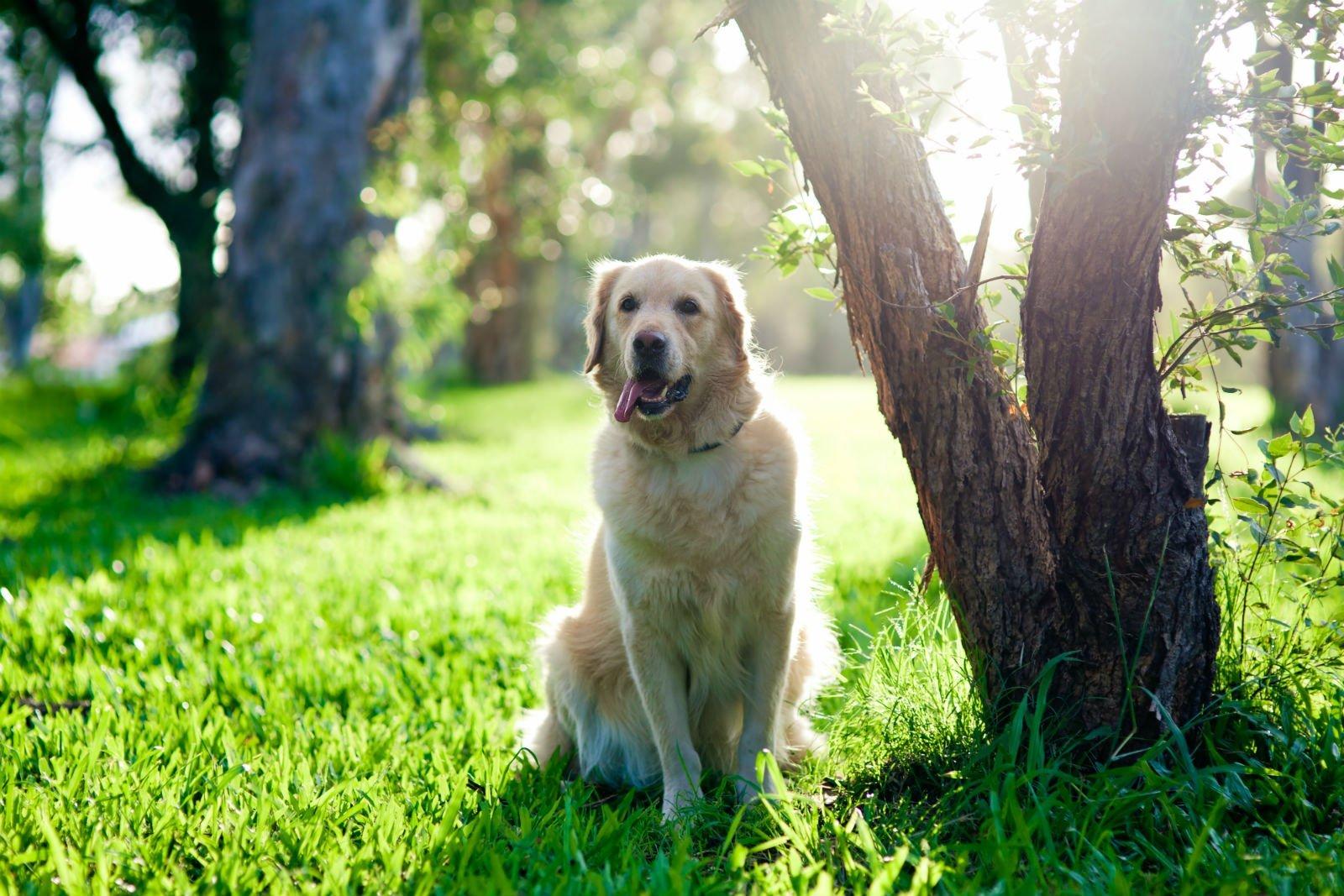 un cane in un giardino