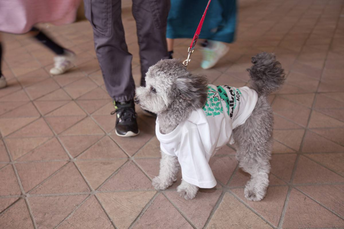 Dog attending Chubu Walkathon