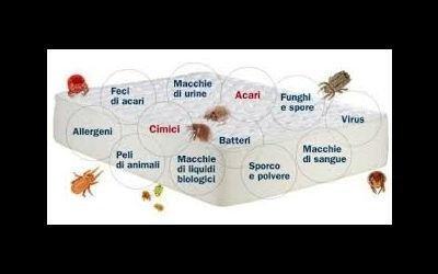 Sporcizia e batteri materasso