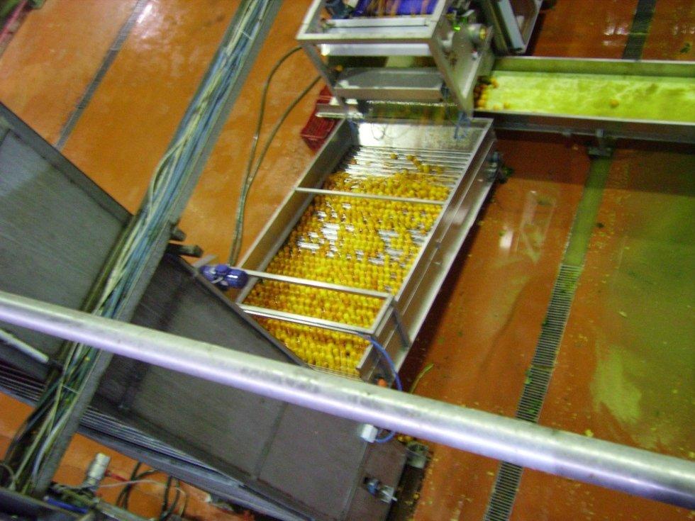 dei limoni su un nastro trasportatore con rulli in acciaio