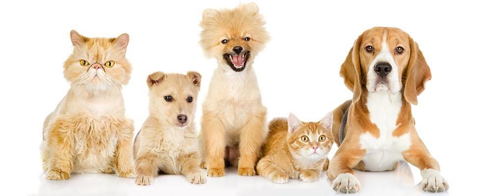 vendita cani e gatti