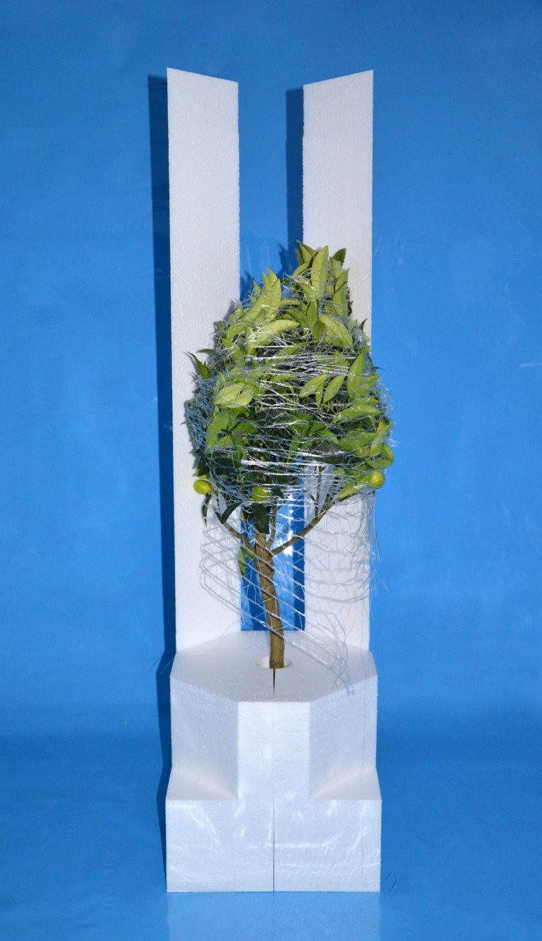 Imballo pianta