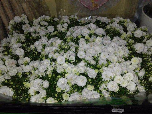 dei fiori bianchi