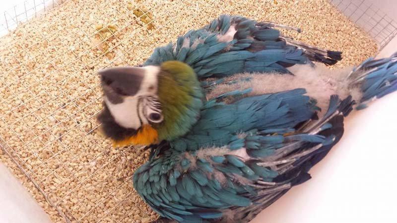 pappagallo che guarda la macchina fotografica