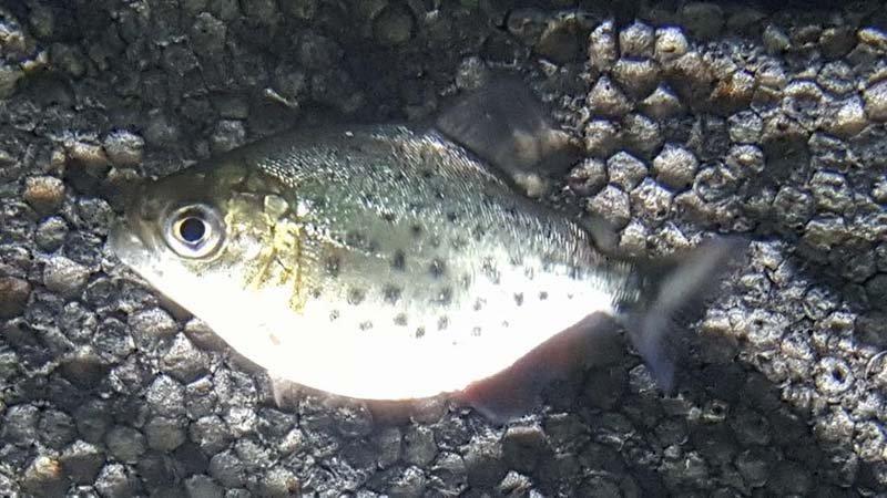 pesce in un acquario