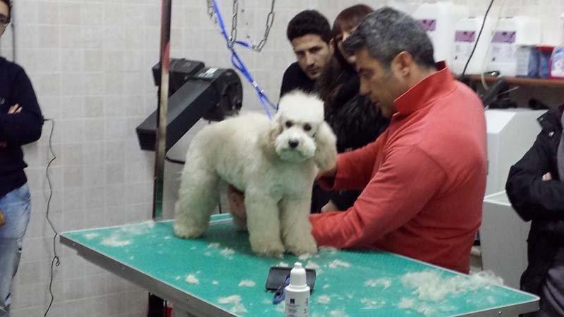 taglio del pelo a un cane