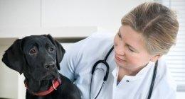 anagrafe canina, microchip per animali, visite veterinarie domiciliari