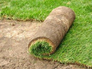 erba giardino