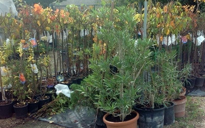 vendita alberi giaridno