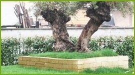 posta alberi secolari