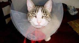 visite specialistiche, visite accurate, specialista animali, analisi per cani, analisi per gatti