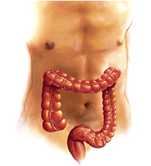 colonproctologia