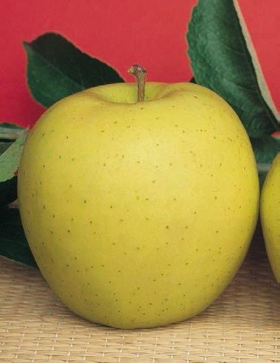 mela golden delicious