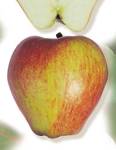 mela muso di bove