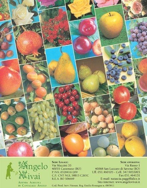 piante da frutto in vaso - Vivai Bologna
