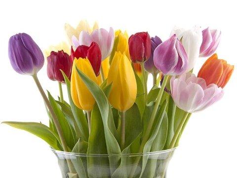 Mazzo di tulipani variopinti