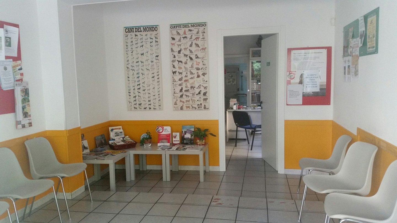 sala di aspetto dell'ambulatorio veterinario