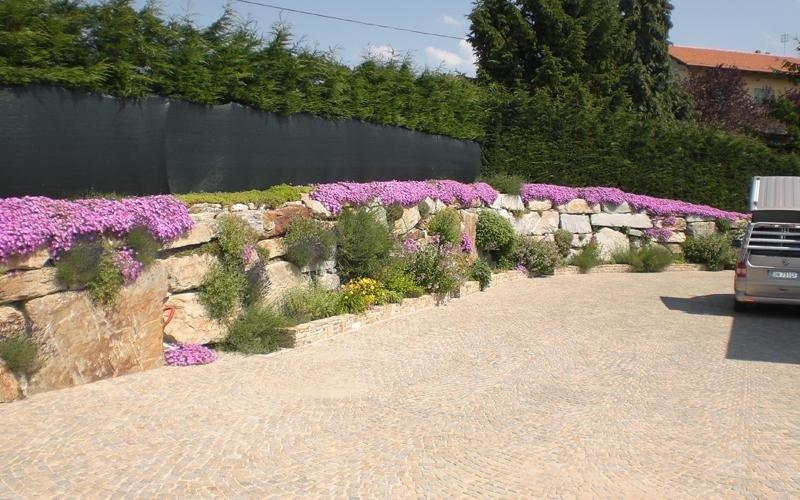 piante da arredo per interni cuneo