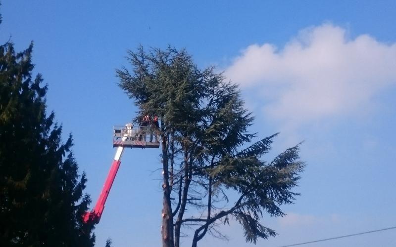 potatura alberi cuneo