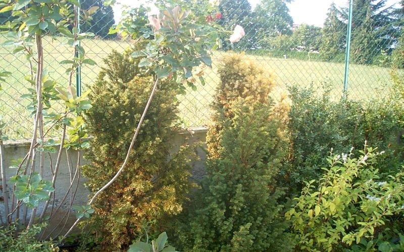 Piante ornamentali per giardino cuneo eden idea for Vendita piante ornamentali