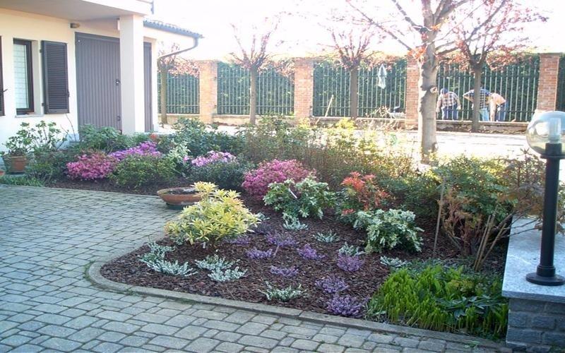 piante ornamentali da esterno cuneo