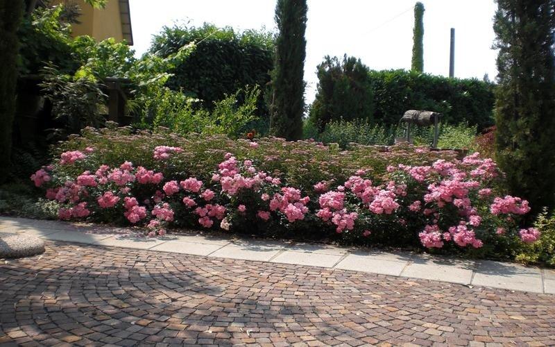 manutenzione giardini privati cuneo